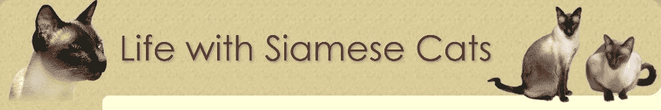 Life with siamese cats logo