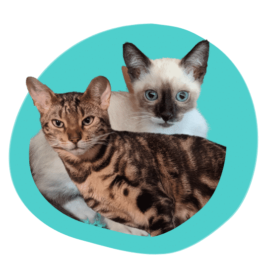 Achilles and Zeus are happy Prudent Pet policyholders