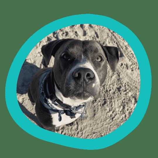 Baikai appreciates having pet insurance