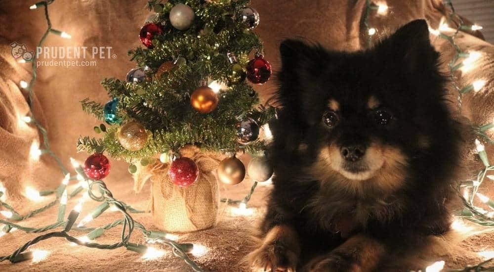 Dog sits next to a Christmas tree