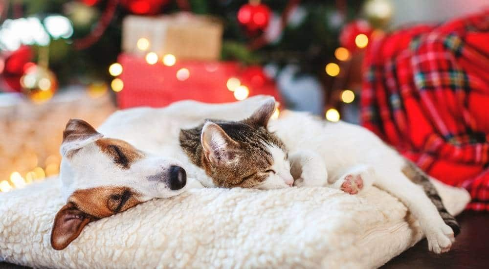 Dog and cat sleeping by a Christmas tree